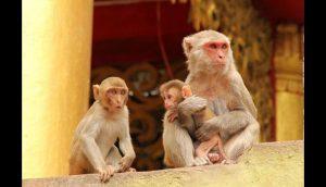 Dos- monos- y- un monito