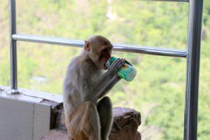 Mono con spay