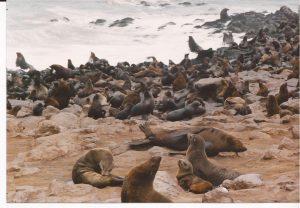 V.A. Costa de los esqueletos. Leones marinos