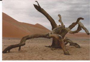 V.A. Desierto Namib, árbol en desierto (FILEminimizer)