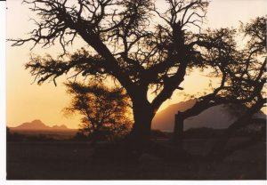 V.A. Desierto Namib, Puesta de sol con árbol (FILEminimizer)